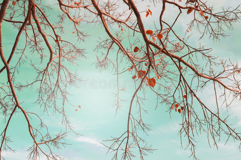Autumn trees leaves in vintage color stock photo