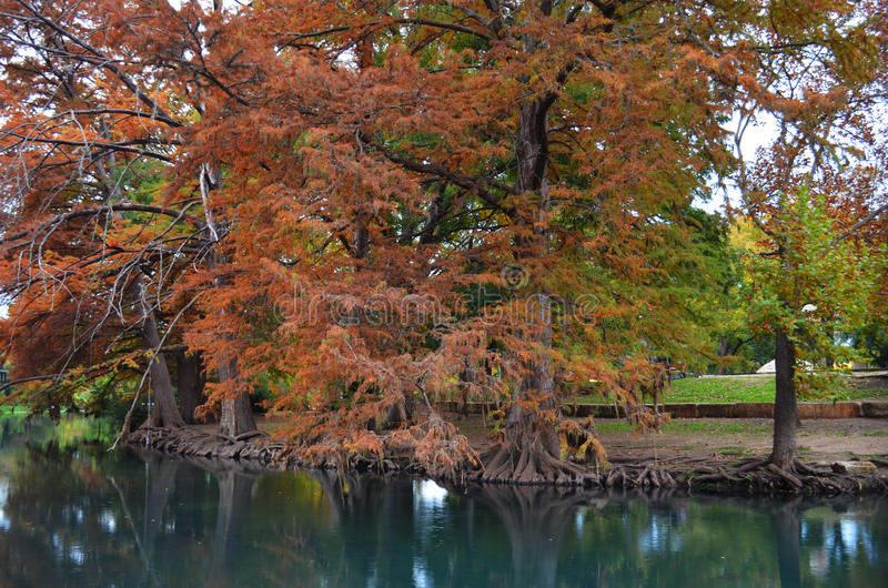 Autumn Trees a lo largo de la orilla del río imagenes de archivo