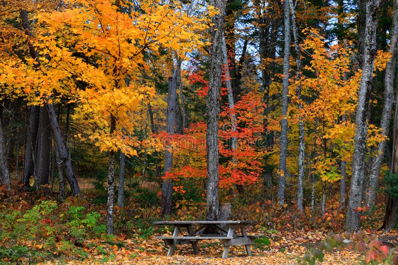 Autumn trees in Mont Tremblant national park royalty free stock image