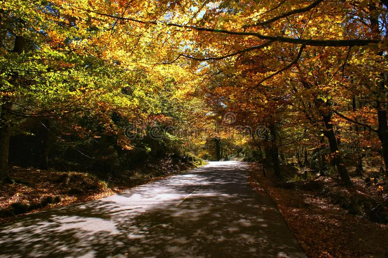 Autumn trees in the National Park of Geres royalty free stock photo