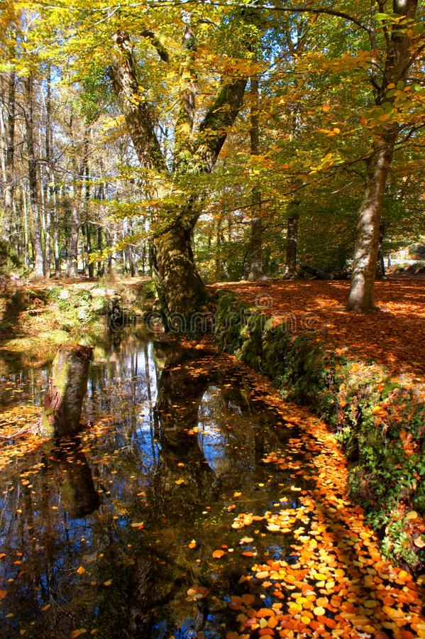 Autumn trees in the National Park of Geres stock images