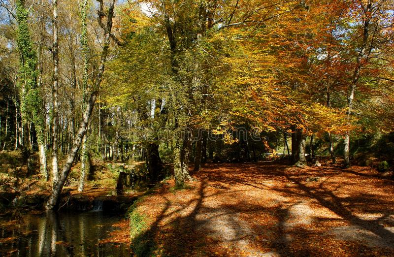 Autumn trees in the National Park of Geres stock photos