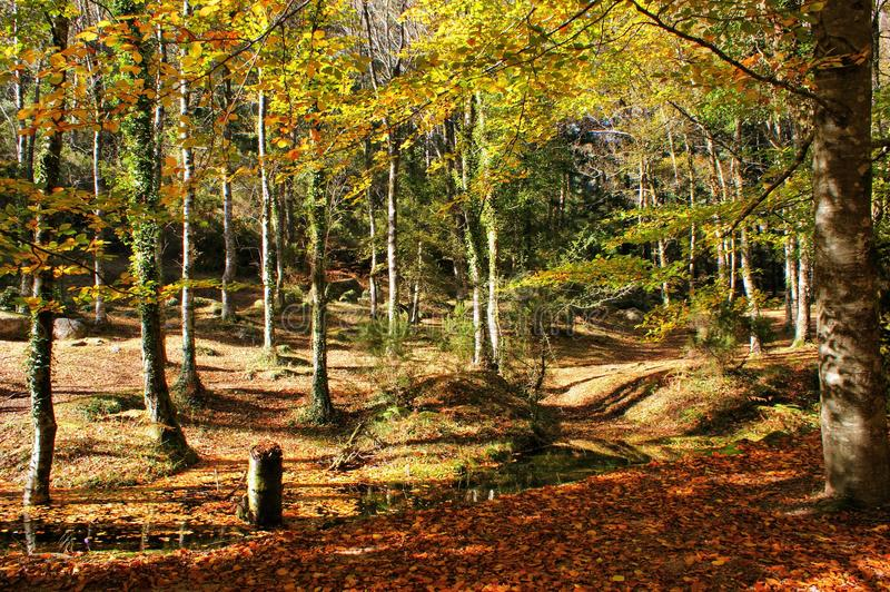 Autumn trees in the National Park of Geres royalty free stock images