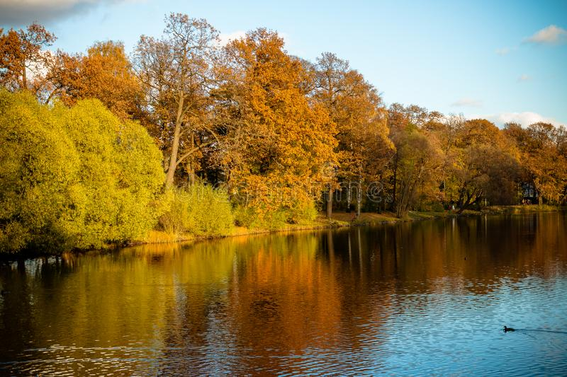 Autumn trees near the lake in cloudy, sunny weather,autumn pictorial landscape, Many autumn trees at nature park in. Autumn trees near the forest river in cloudy stock image