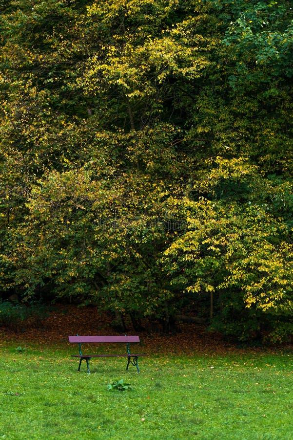 Autumn Trees och tömmer bänken royaltyfri foto