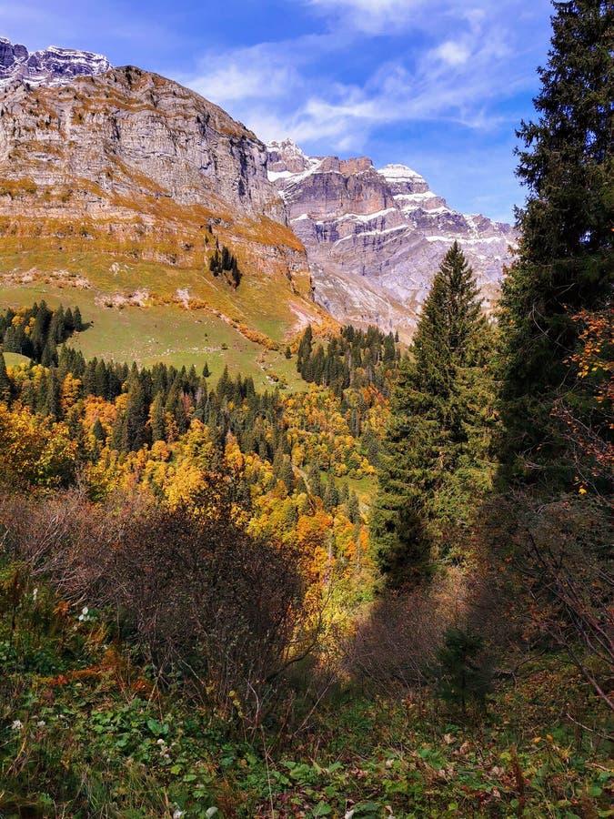 Free Autumn Trees On Slopes Of The Glarus Alp Mountains Stock Images - 163893284