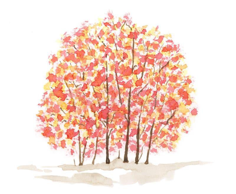 Autumn trees over white background royalty free illustration