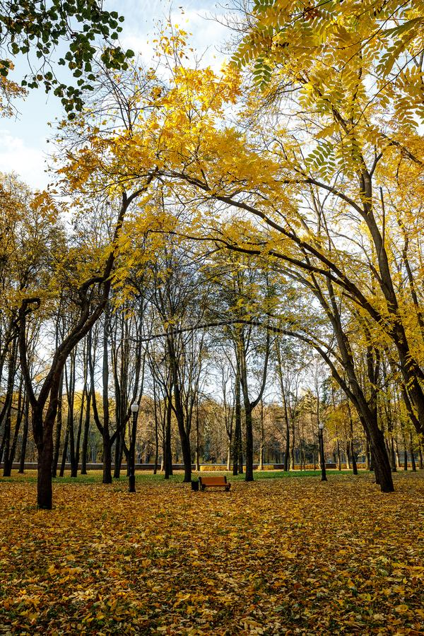 Autumn trees in the park.  stock photo