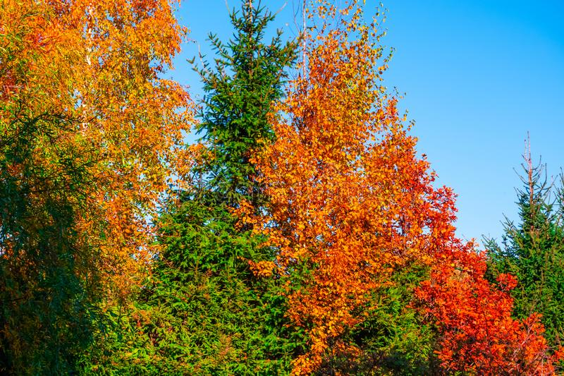 Autumn trees in the park stock photo