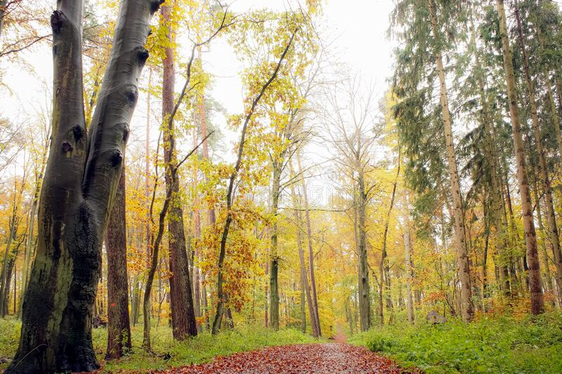 Autumn trees in the park or forest stock photos