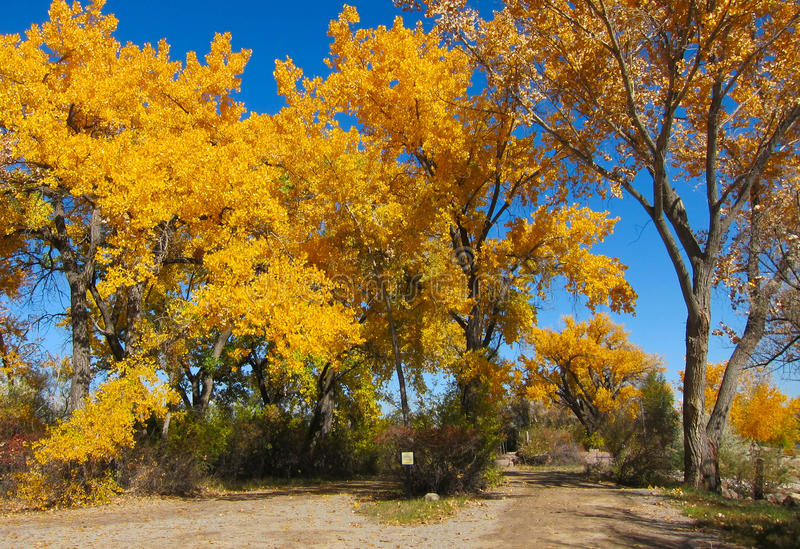 Autumn trees at the park. Autumn Oak trees at the Berg park in Farmington , New Mexico, America, United states royalty free stock images