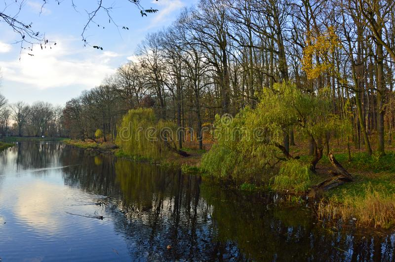 Autumn trees by a pond in a park stock photo