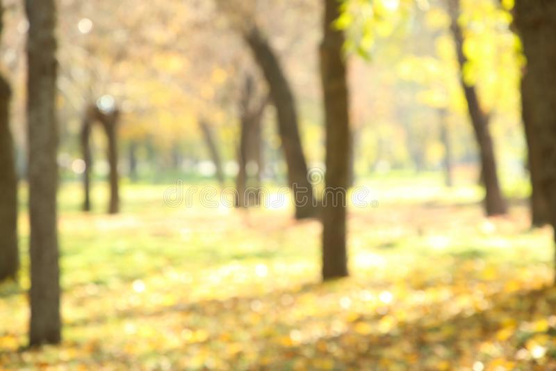 Autumn trees in the public park. Natural bokeh background royalty free stock photography