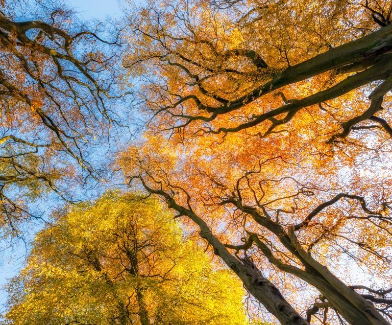 Autumn Trees R-U photos stock