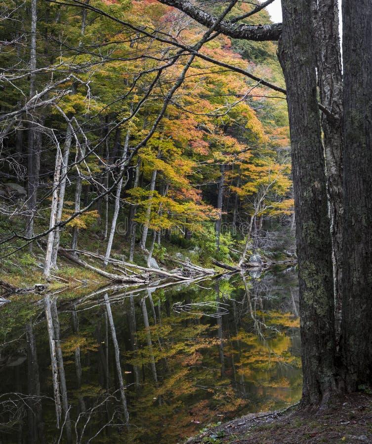 Autumn Trees Reflected in een Catskill-Bergmeer royalty-vrije stock foto