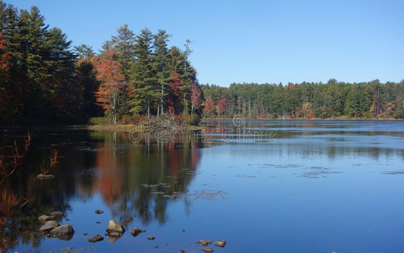 Autumn trees reflected in lake water stock image