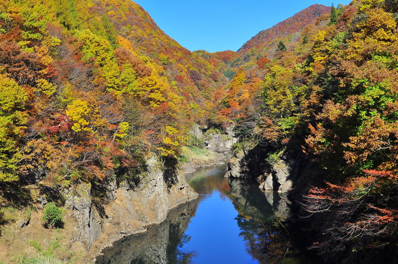 Autumn Trees Reflected In Tonegawa River Royalty Free Stock Images