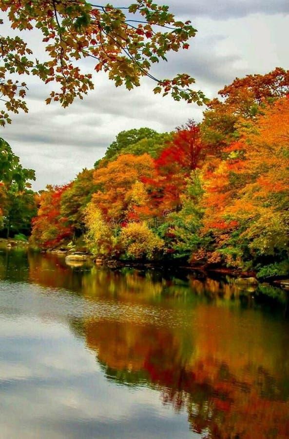 Autumn trees reflecting on lake royalty free stock photo