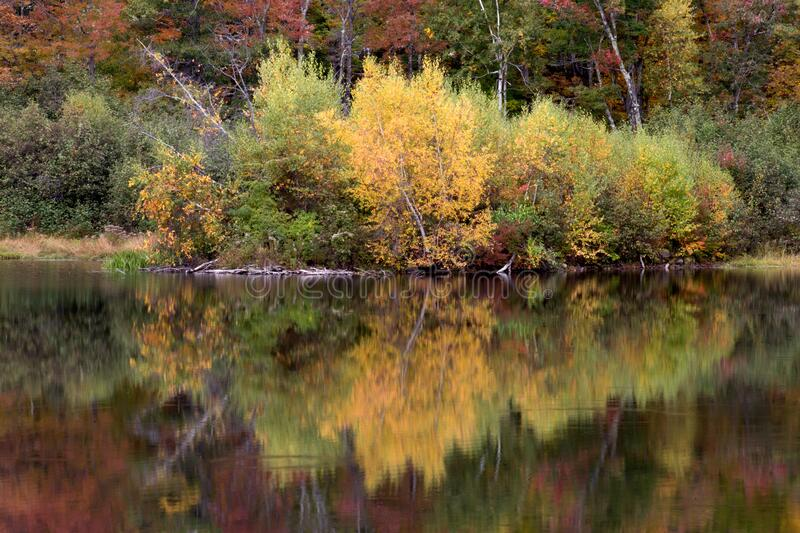 Autumn trees reflecting from lake stock photos