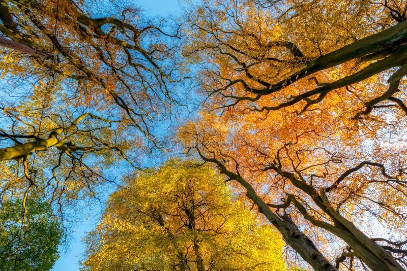 Autumn Trees Reino Unido foto de stock