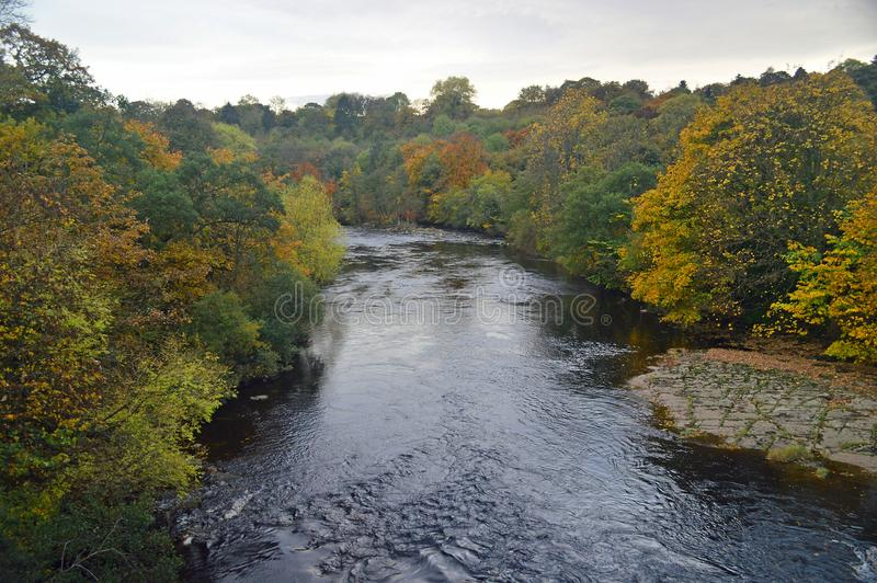 Autumn trees by the river swale royalty free stock images