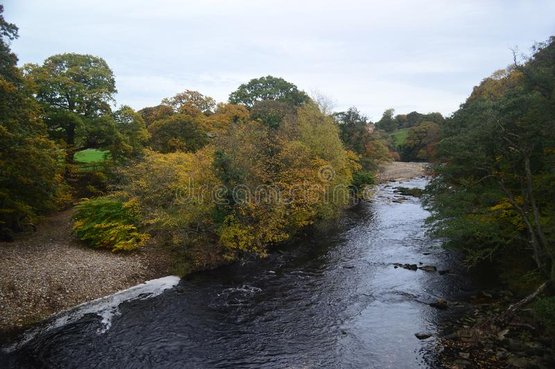 Autumn trees by the river swale. Near to Richmond Yorkshire on the edge of the Yorkshire Dales National Park. Portrait orientation taken in October royalty free stock photos