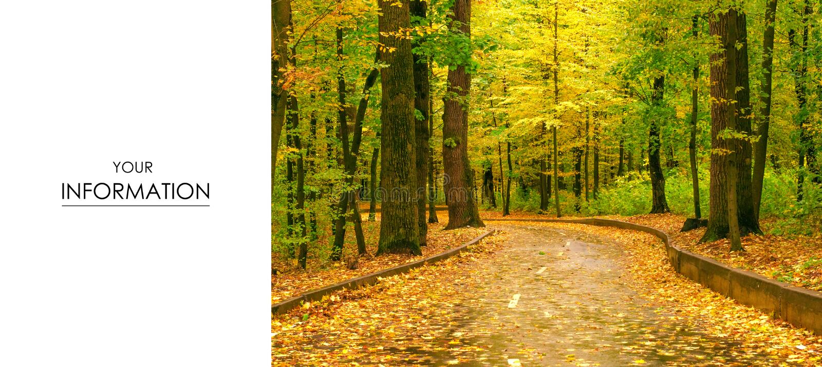 Autumn trees road landscape view of yellow red orange leaves royalty free stock images
