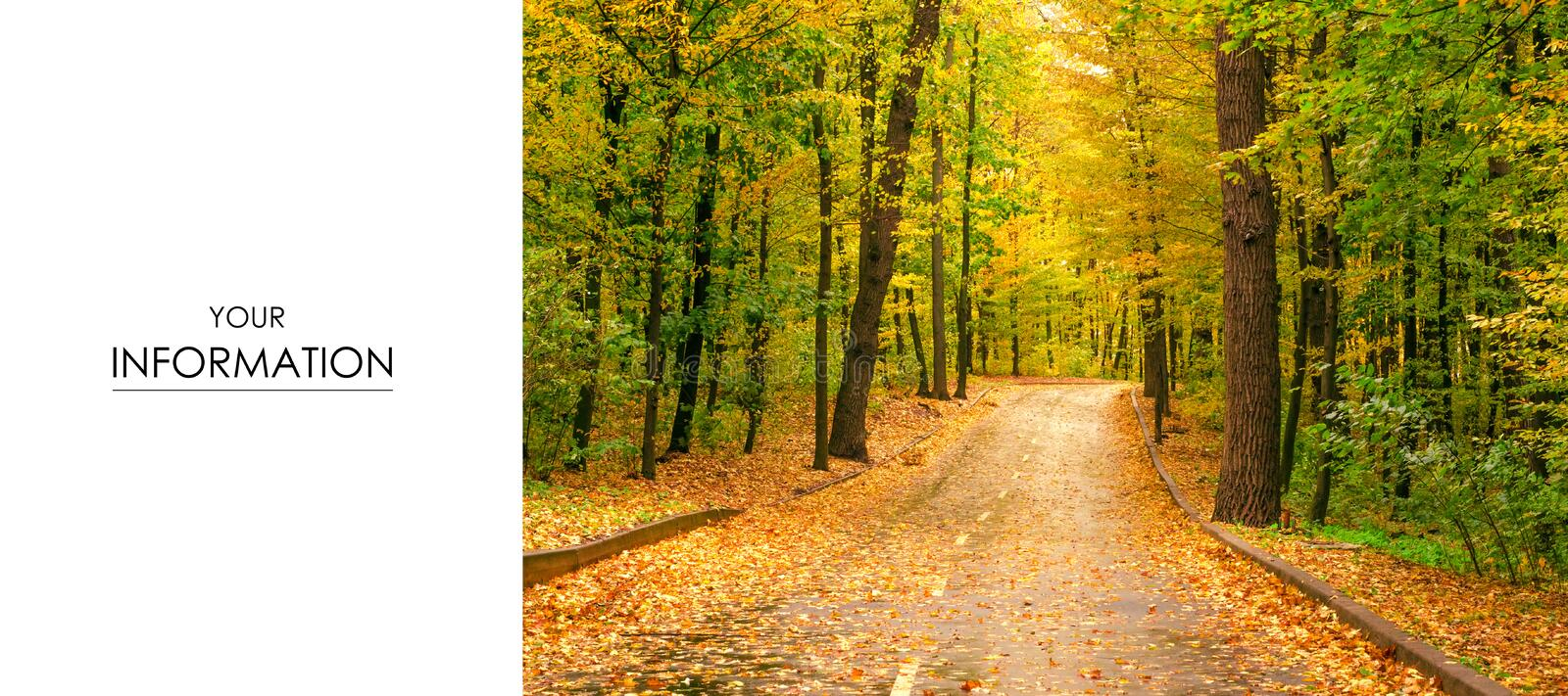 Autumn trees road landscape view of yellow red orange leaves stock image