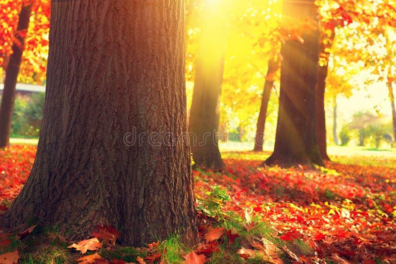Autumn Trees und Blätter im Sonnenlicht stockfotografie