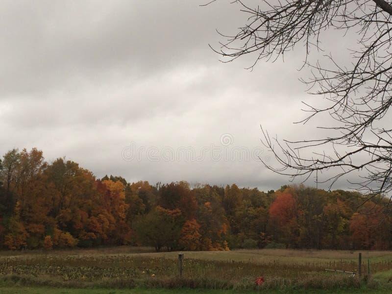 Autumn Trees variopinto il giorno nuvoloso fotografia stock libera da diritti