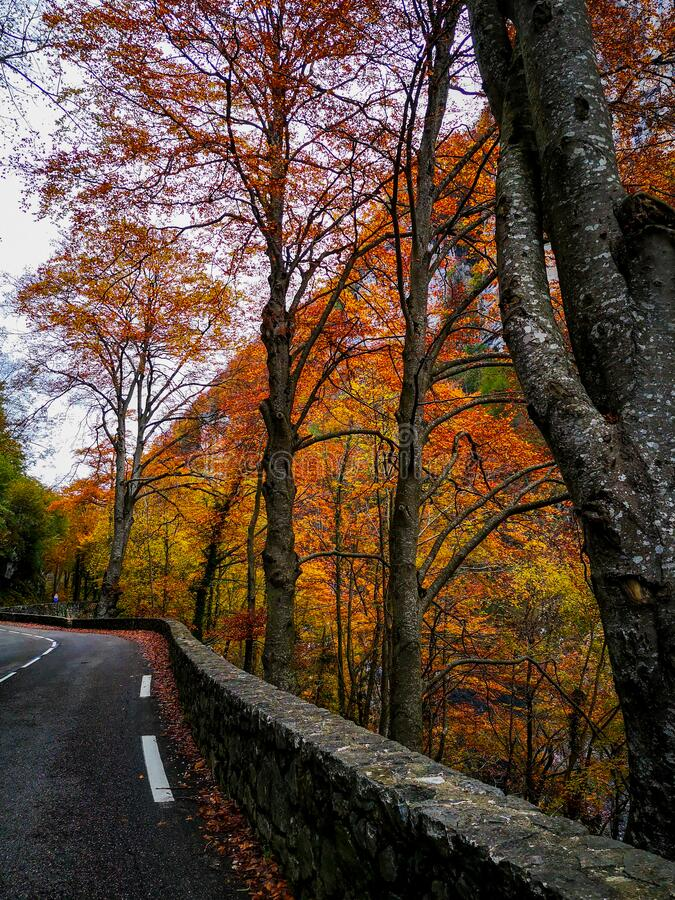 Autumn trees in the Vercors royalty free stock photo
