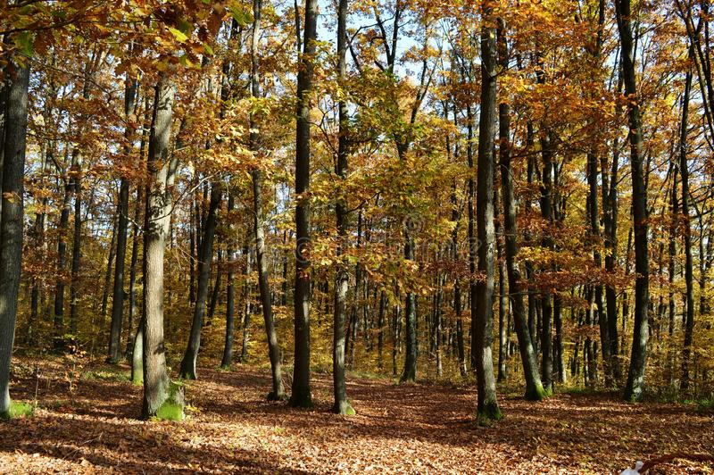Autumn trees view stock images