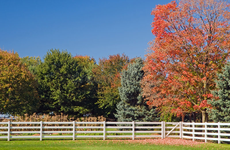 Download Autumn Trees And White Fence Stock Photo - Image of leaf, cloudless: 8429116