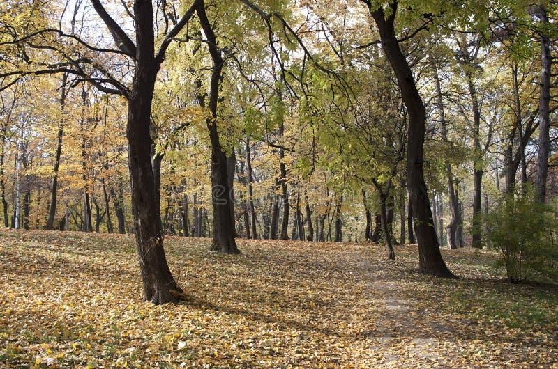 Autumn - RAW format stock photo