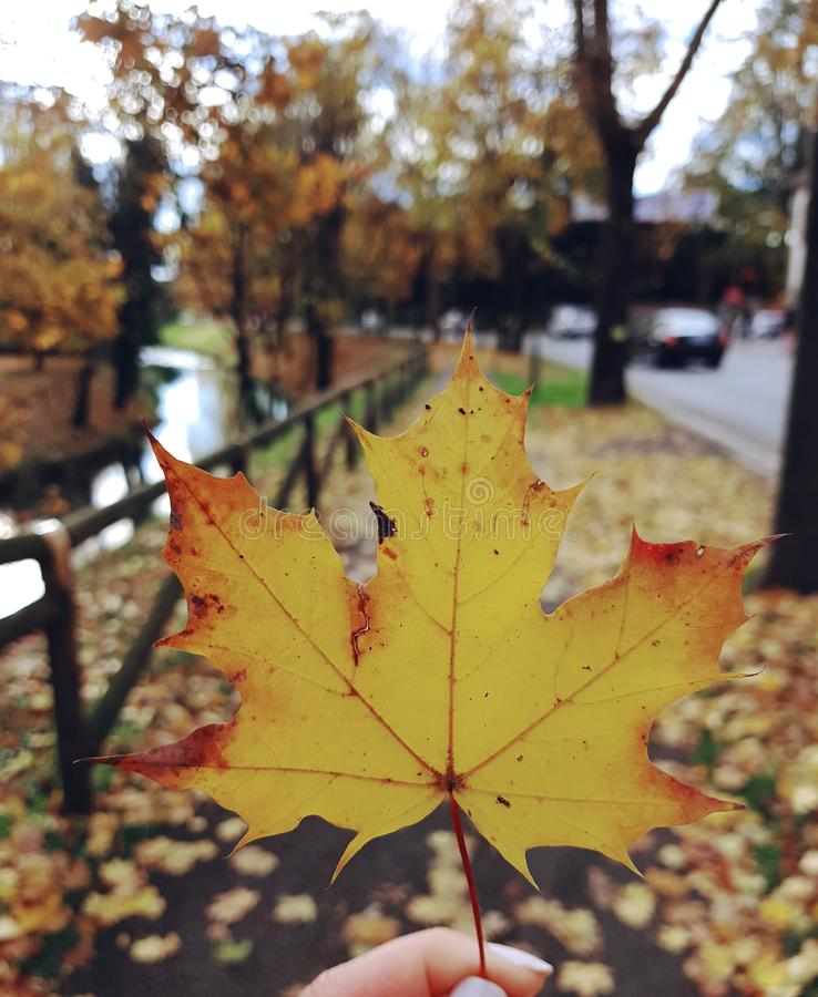 Download Autumn leave stock photo. Image of fall, autumn, leaves - 105343698