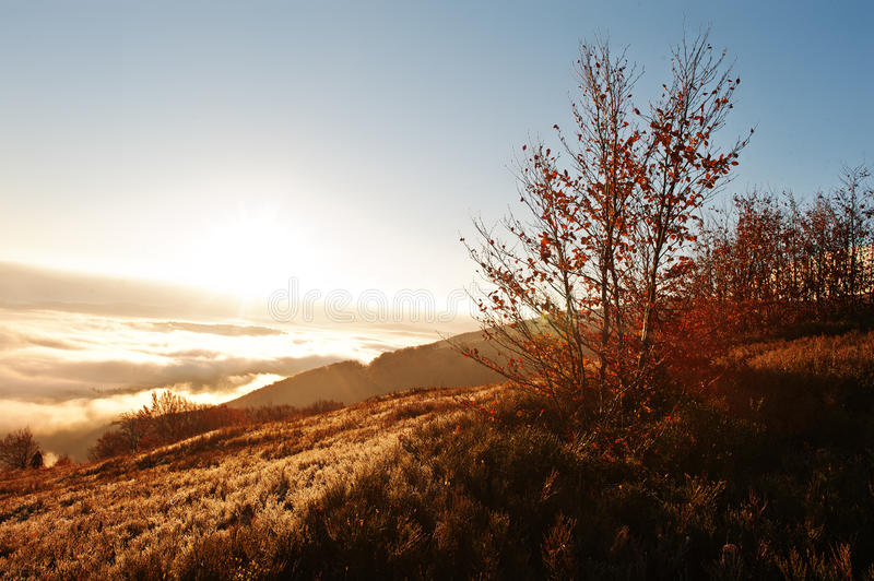 Autumn trrees background amazing picturesque landscape of Carpathian mountains on fog and morning sunrise. Beauty of world on stock photography