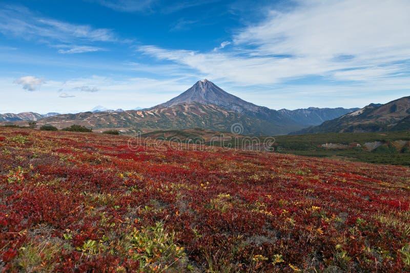 Autumn tundra and volcano royalty free stock photography