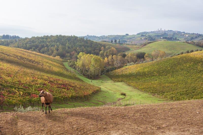 Autumn in Tuscany, Italy. Near San Gimignano stock image