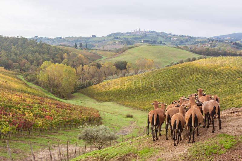 Autumn in Tuscany, Italy. Near San Gimignano royalty free stock images