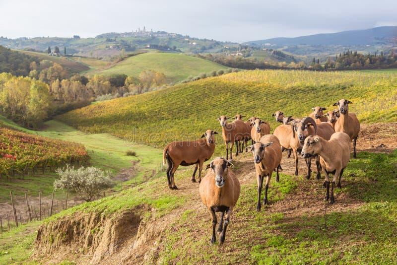 Autumn in Tuscany, Italy. Near San Gimignano royalty free stock image