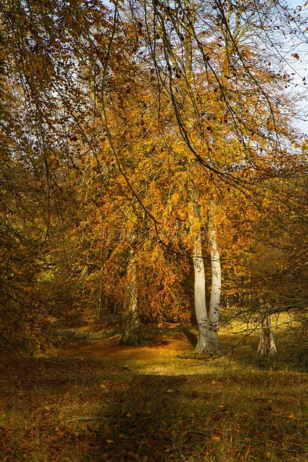 Autumn In une forêt photographie stock libre de droits