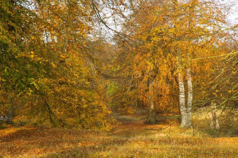 Autumn In une forêt photos libres de droits