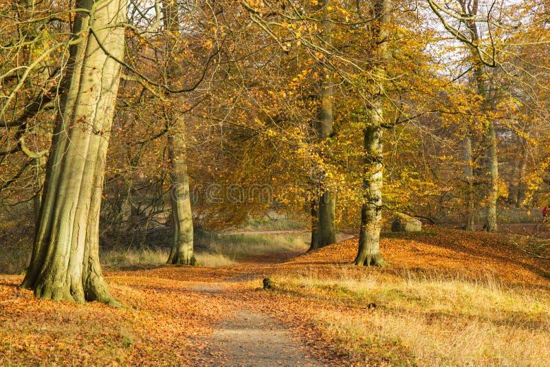 Autumn In une forêt images libres de droits