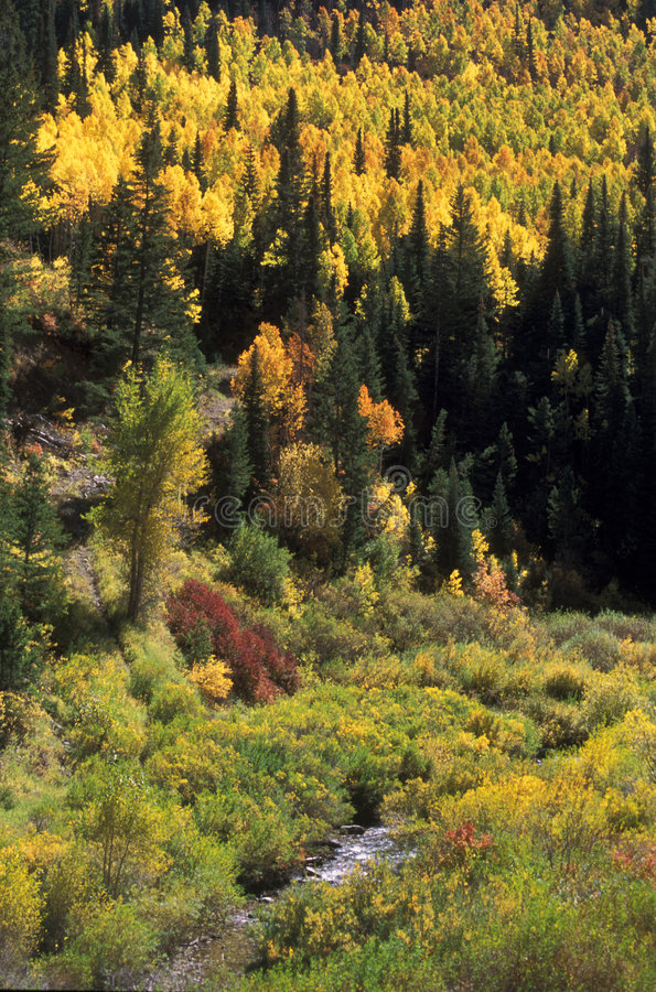 Download Autumn in Utah mountains stock photo. Image of creek, foliage - 146776