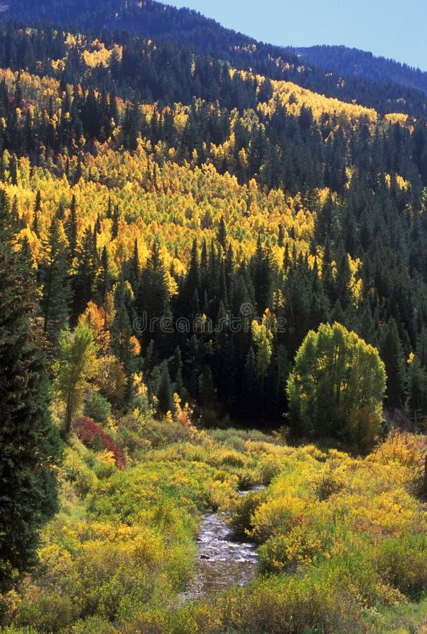 Autumn in Utah mountains royalty free stock photos