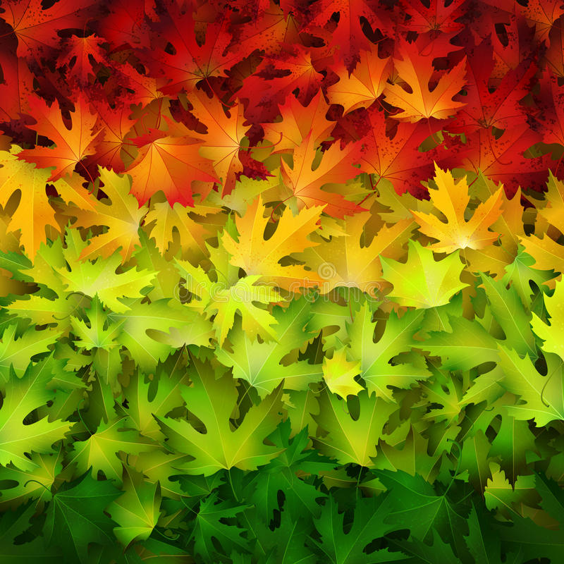 Autumn vector background with colorful leaves royalty free illustration