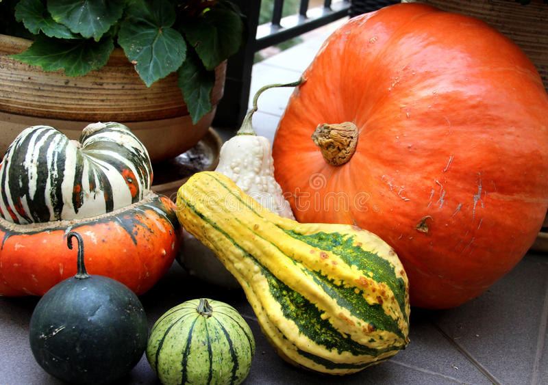 Autumn Vegetables Royalty Free Stock Photo