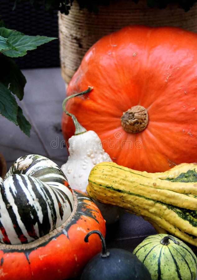 Download Autumn vegetables stock photo. Image of marrows, decoration - 26698280