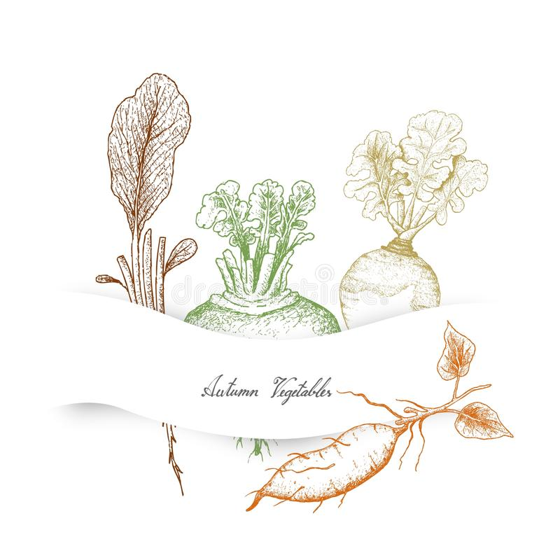 Autumn Vegetables de radis, de rutabaga, de patate douce et de navet illustration stock