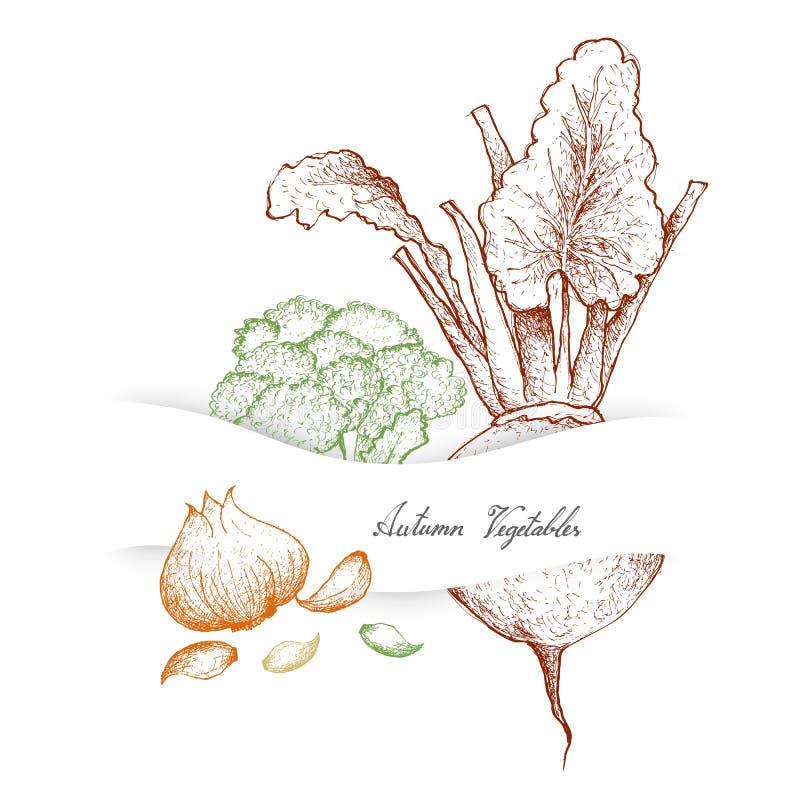 Autumn Vegetables dibujado mano del bróculi, de remolachas y del ajo ilustración del vector